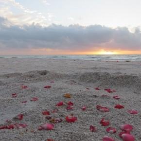 Beach Weddings - AVC 2 SMALL
