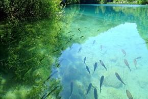 Plitvice Lakes - Kaluderovac Lake290x290