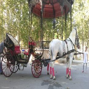 Antropoti - Konji i kočija